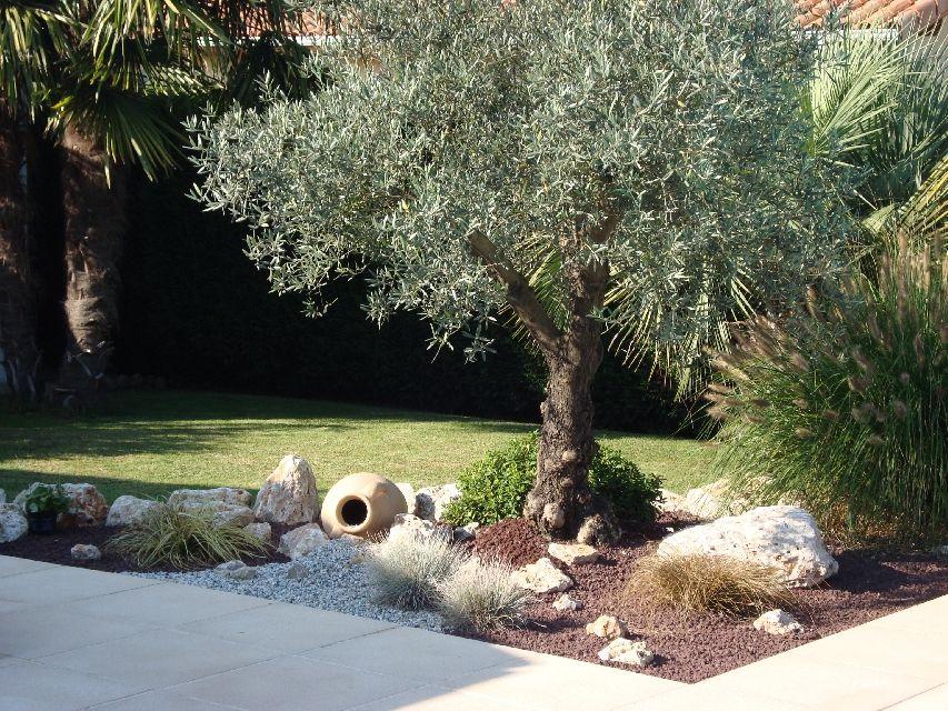 amenagement jardin avec un olivier