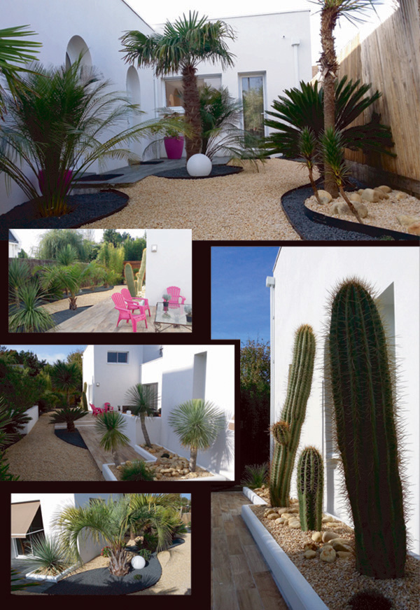 amenagement jardin cactus