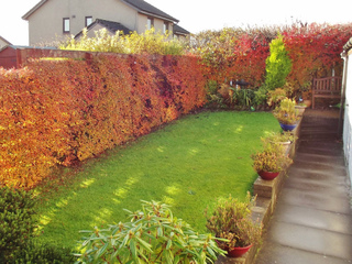 amenagement jardin en long