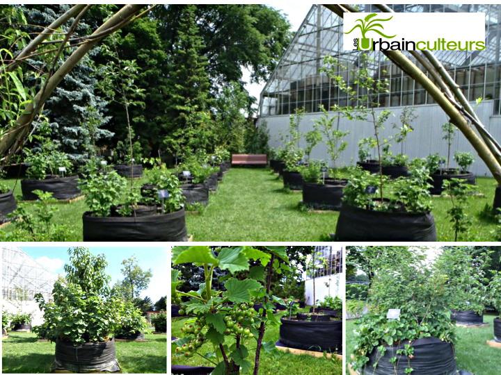 amenagement jardin fruitier