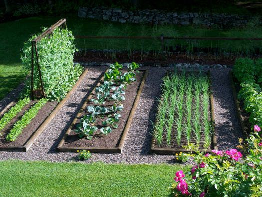 amenagement jardin legumes