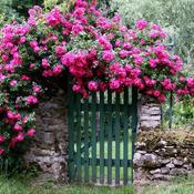 amenagement jardin romantique