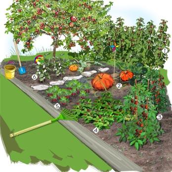 amenagement jardin truffaut