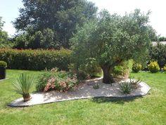 decoration exterieur olivier
