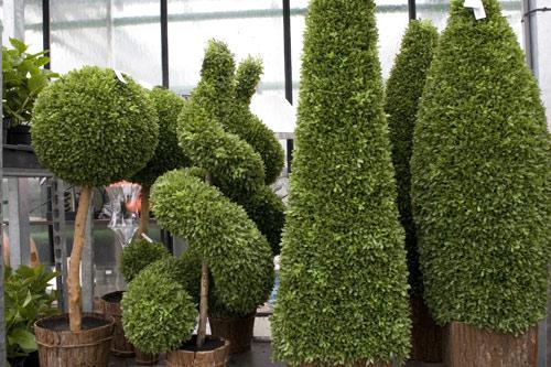 decoration exterieur plantes