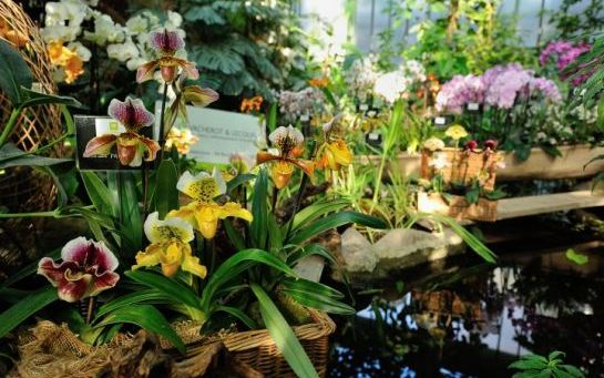 decoration jardin orchidee