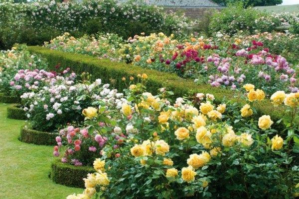 decoration jardin rosier