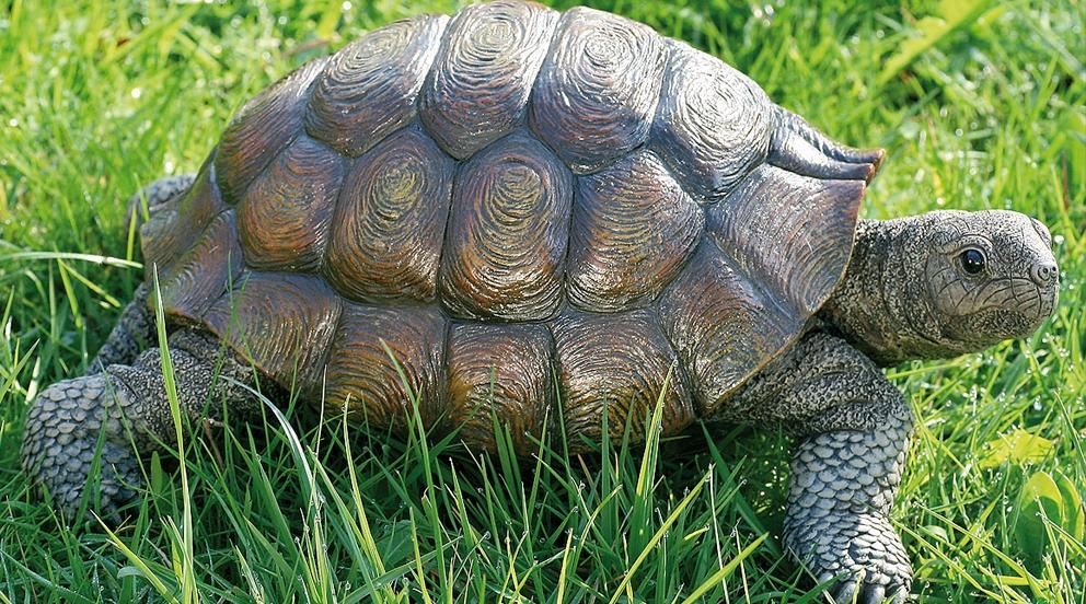 decoration jardin tortue