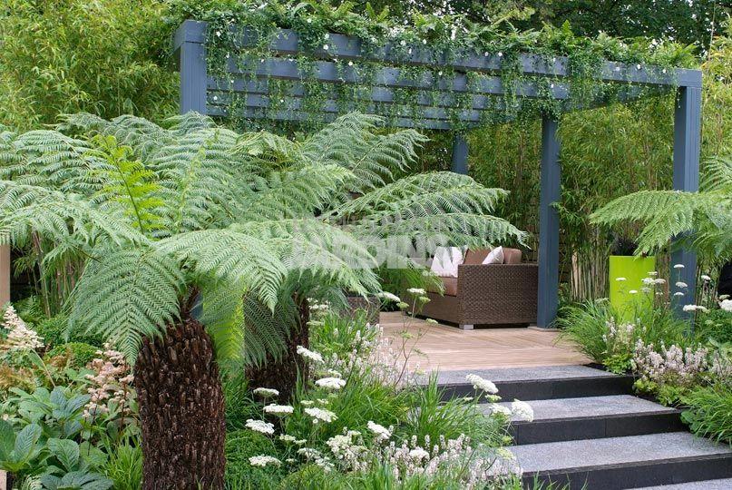 decoration jardin tropical