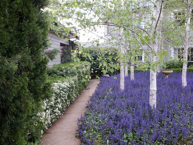 idee jardin a l'ombre