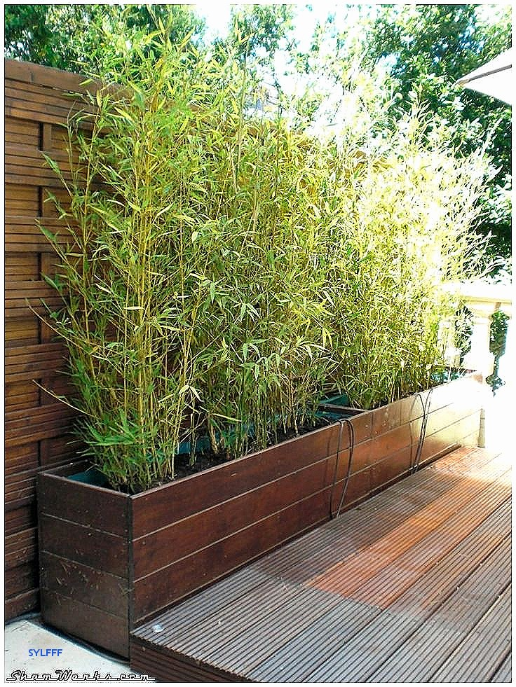 idee jardin avec bambou