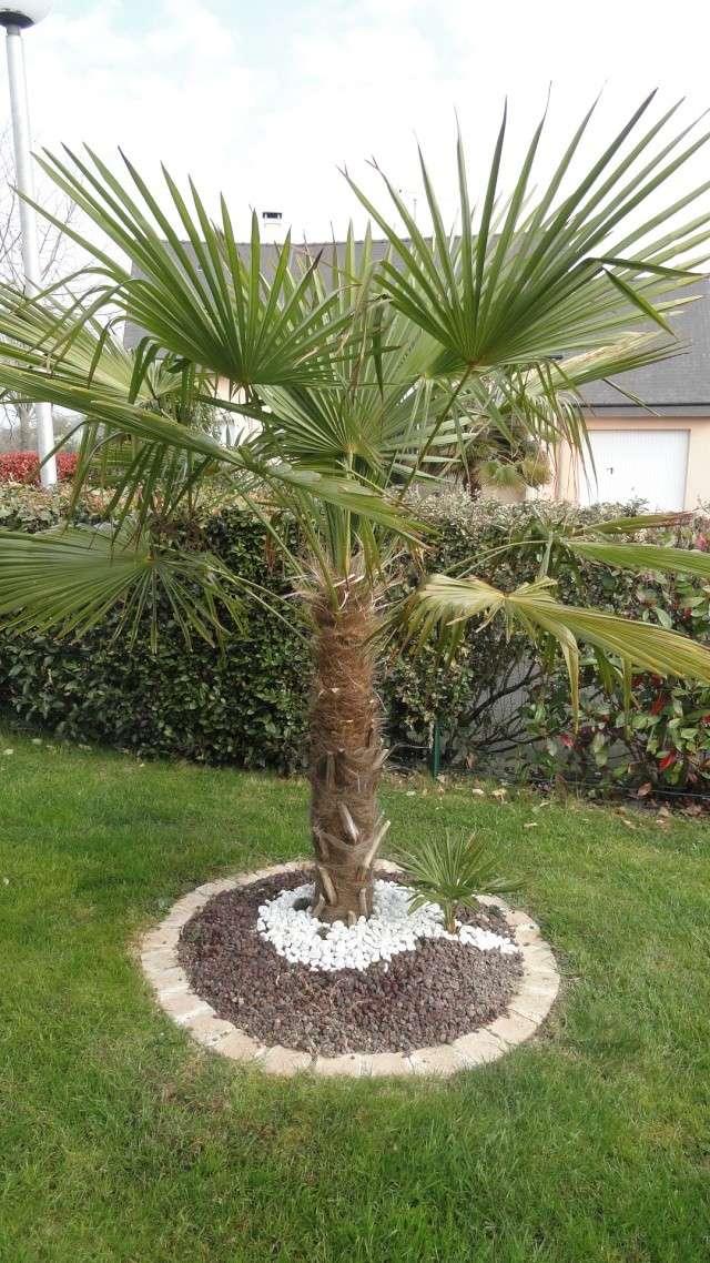idee jardin avec palmier. Black Bedroom Furniture Sets. Home Design Ideas