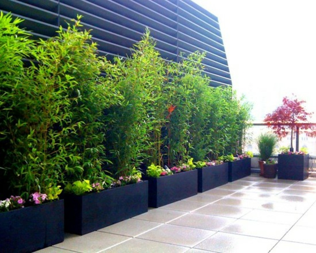 idee jardin bambou