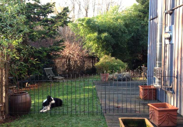 idee jardin chien