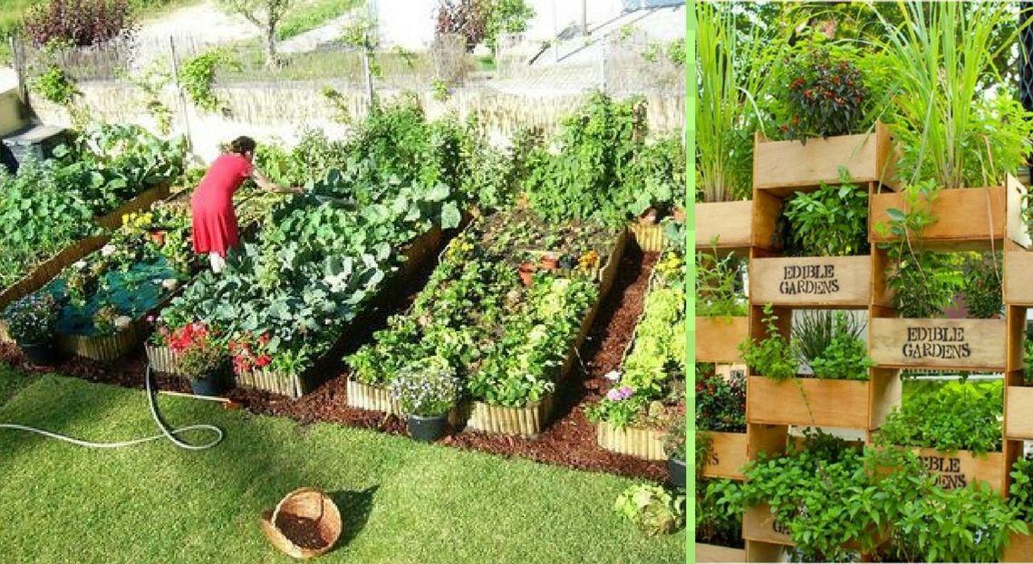idee jardin ecologique