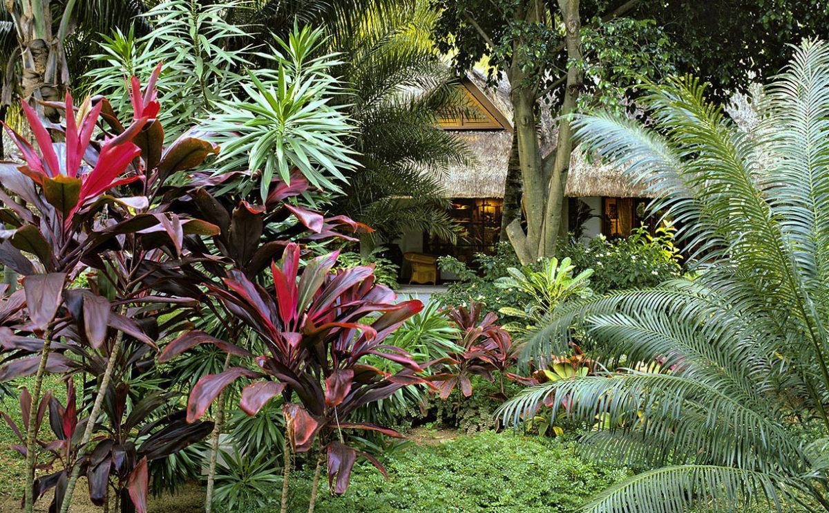idee jardin exotique