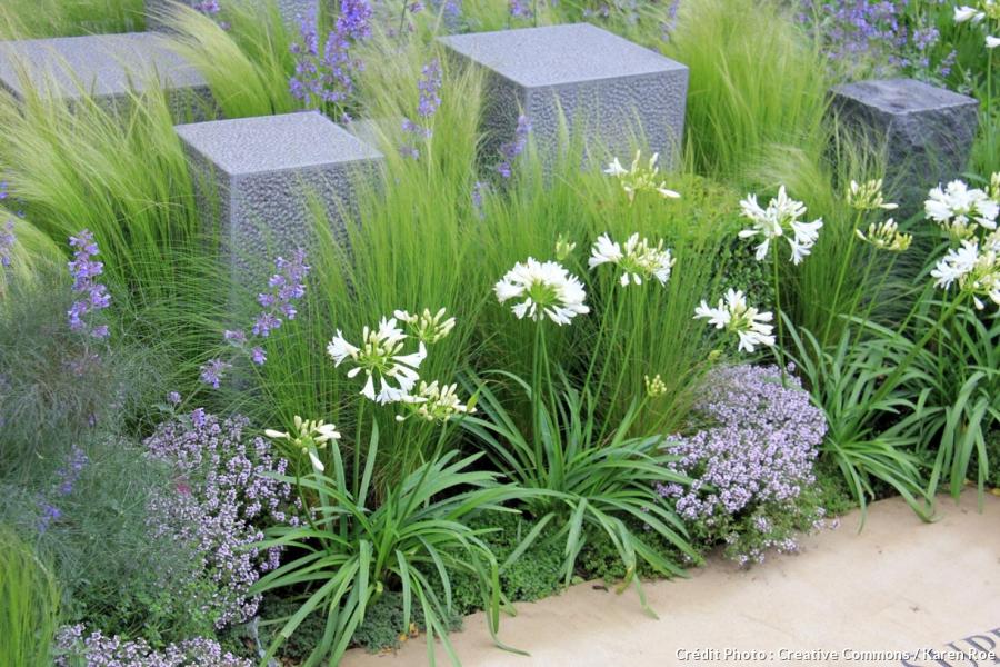 idee jardin graminee