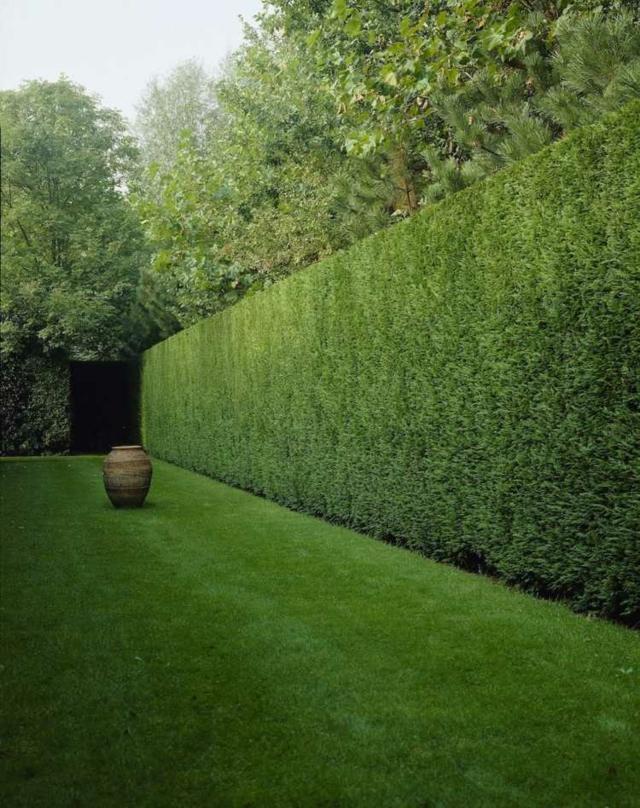 idee jardin haie