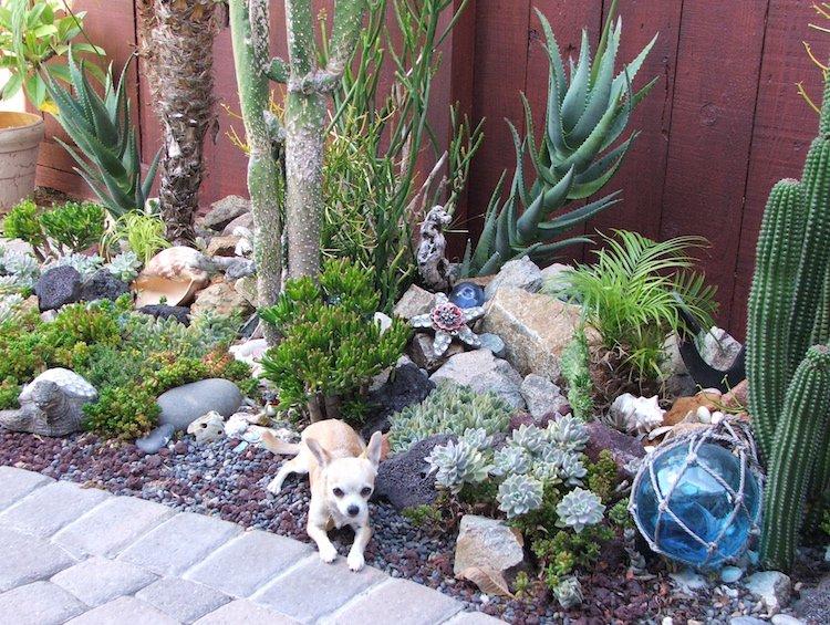 idee jardin plante grasse