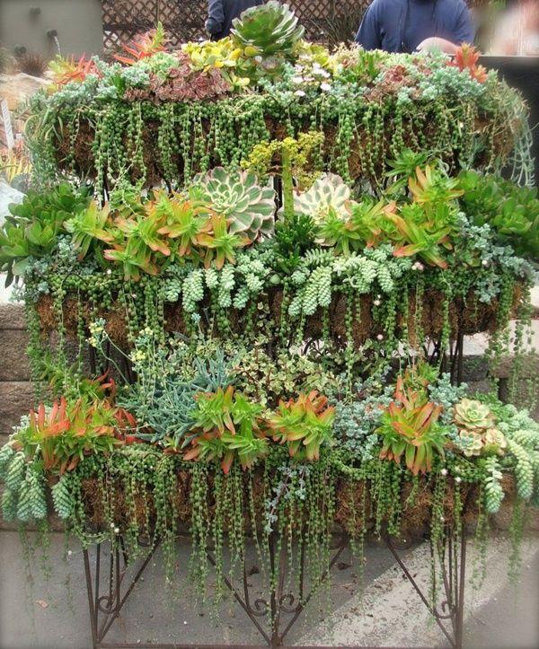 idee jardin succulentes